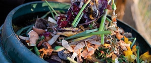 Peelings, grass clippings, tea bags etc. can all go into the compost bin