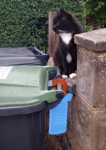 A friendly cat approves of the new bin hangers.